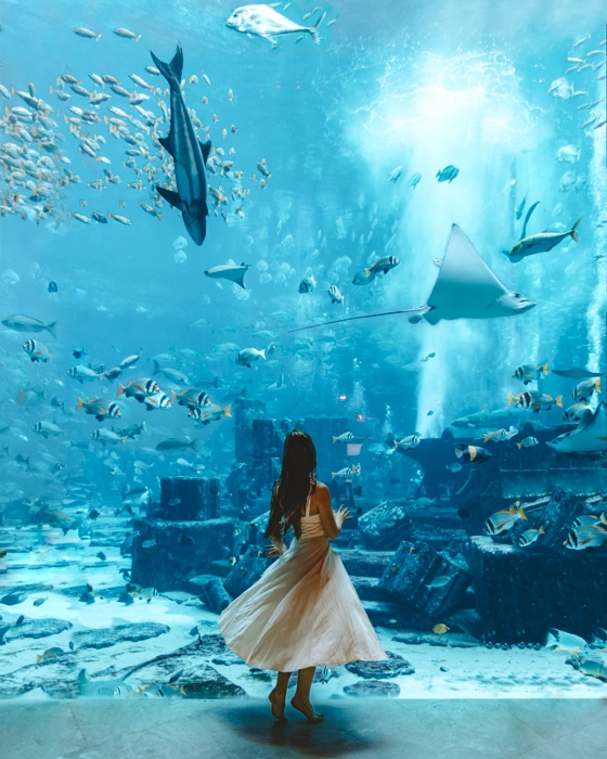 Atlantis the Palm twirling in front of the aquarium by Dancing the Earth