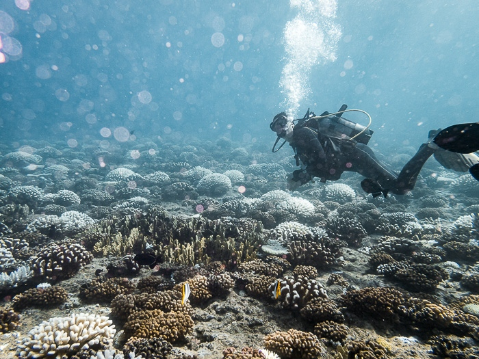 French Polynesia travel guide diving in Huahine with Mahana dive by Dancing the Earth
