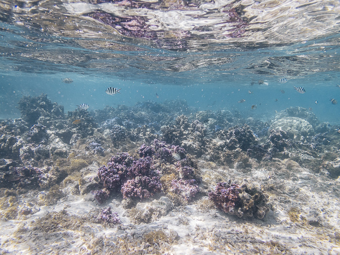 French Polynesia travel guide Huahine secret coral garden by Dancing the Earth
