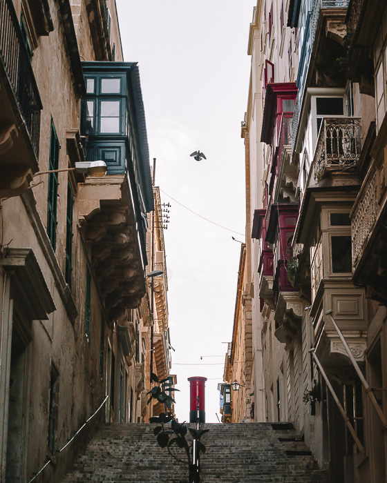 Malta travel guide Valletta streets with bird by Dancing the Earth