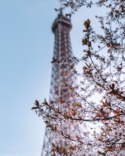 Plums and Eiffel Tower by Dancing the Earth