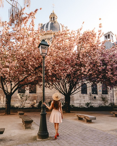Spring in Paris Kanzan cherry blossoms in Institut de France by Dancing the Earth