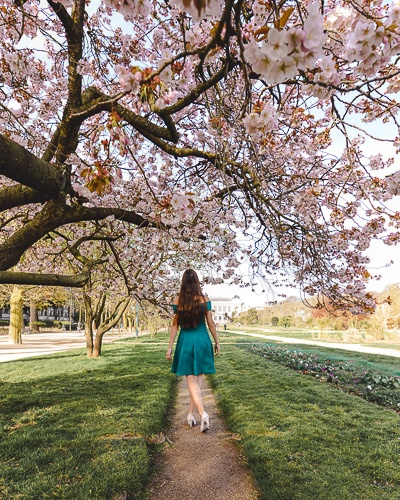 Spring in Paris cherry blossoms in Jardin des Plantes by Dancing the Earth
