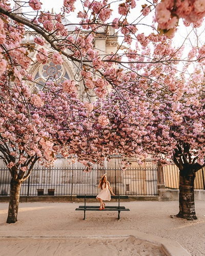 Spring in Paris sitting under the cherry blossoms of Notre-Dame by Dancing the Earth