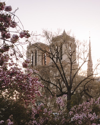 Cherry blossoms at sunrise framing Notre-Dame de Paris by Dancing the Earth