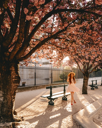 Spring in Paris golden hour under the cherry blossoms of Notre-Dame by Dancing the Earth