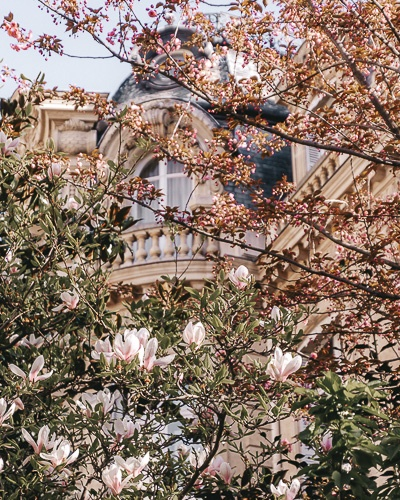 Spring in Paris magnolias and plums in Parc Monceau by Dancing the Earth