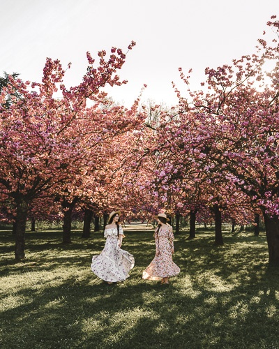 Spring in Paris cherry blossoms of Parc de Sceaux by Dancing the Earth
