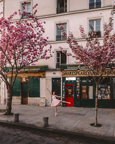 Spring in Paris Kanzan cherry blossoms in front of Shakespeare and Company by Dancing the Earth