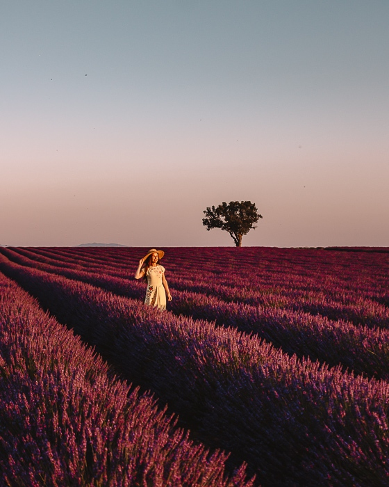 Provence sunset in the lavender fields by Dancing the Earth