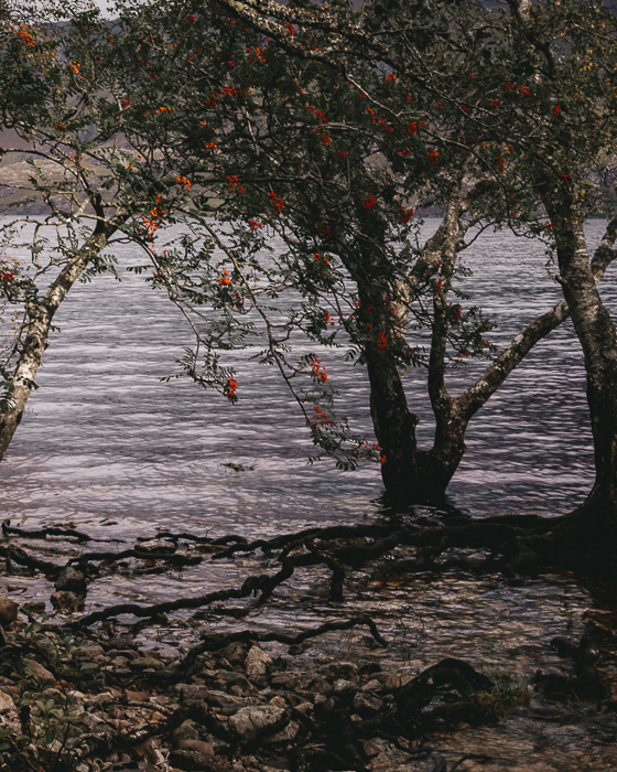 Tree and flowers by Loch Maree by Dancing the Earth